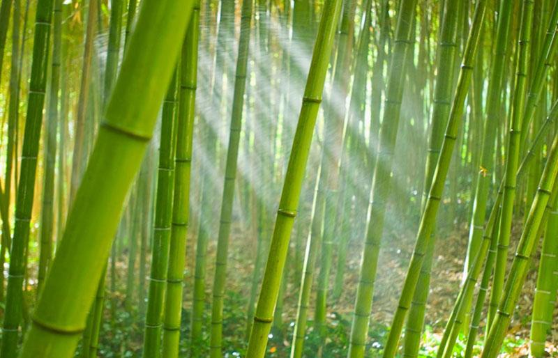 Vải bamboo sử dụng nguyên liệu thiên nhiên